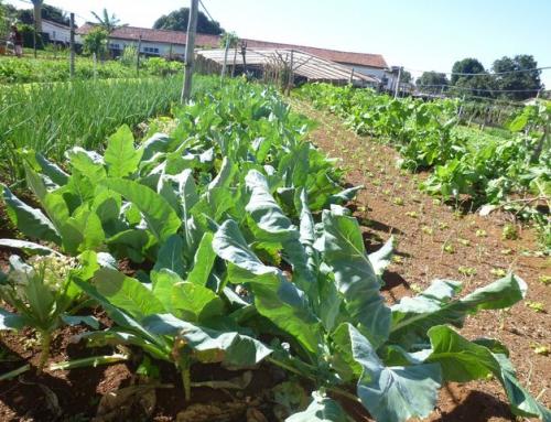 Alimentation – agriculture
