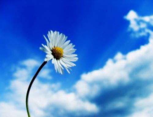Les services éco-systémiques: de quoi s'agit-il?